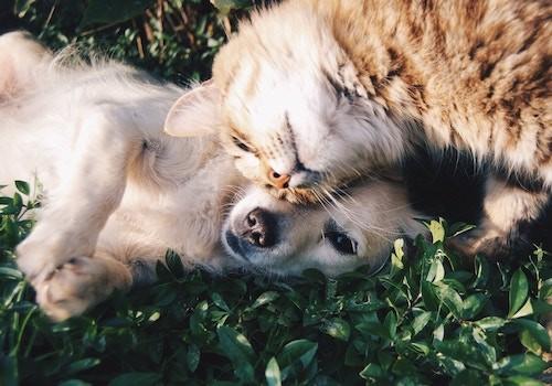 produits-veterinaires-dunkerque-coudekerque-branche